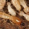 ข่าวผลิตภัณฑ์รอบรู้เรื่อง-บริการกำจัดปลวก-มด-แมลง-หนู